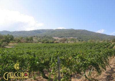 Vini delle Cantine Gallicchio